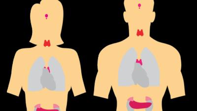 Дисфункция щитовидной железы: 7 причин, почему не работают лекарства