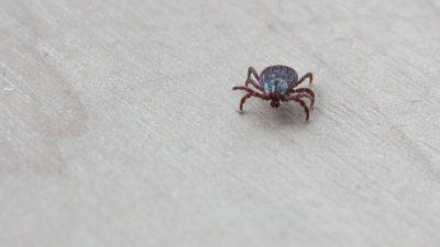 Учёные обнаружили в новогодних ёлках около 25 тысяч насекомых