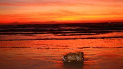 Мировой океан содержит много ртути