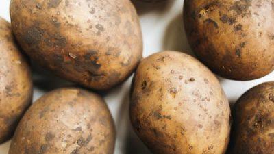 Россельхознадзор вернул в Китай «грязный» картофель