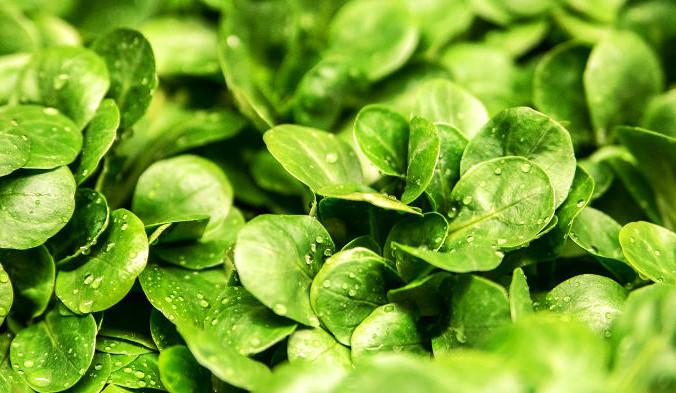 К продуктам, богатым Mg, можно отнести водоросли, тёмно-зелёные листовые и квашеные овощи. Фото: ejaugsburg /pixabay/CC0 Public Domain | Epoch Times Россия