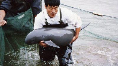 В Китае появился речной дельфин, считавшийся вымершим