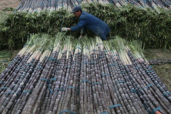 Торговец продаёт сахарный тростник на рынке 13 ноября 2007 года в Нанкине провинции Цзянсу, Китай. China Photos /Getty Images   Epoch Times Россия
