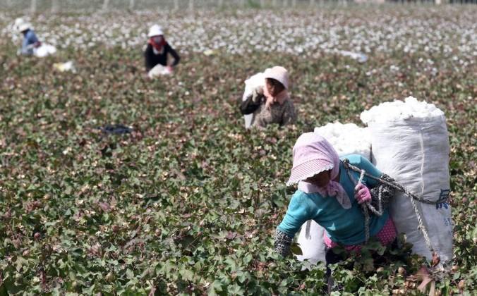 Фермеры собирают хлопок на полях в Хами, регион Синьцзян на северо-западе Китая, 20 сентября 2015 г. STR / AFP via Getty Images   Epoch Times Россия