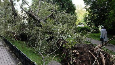 Саратовская область пострадала от урагана