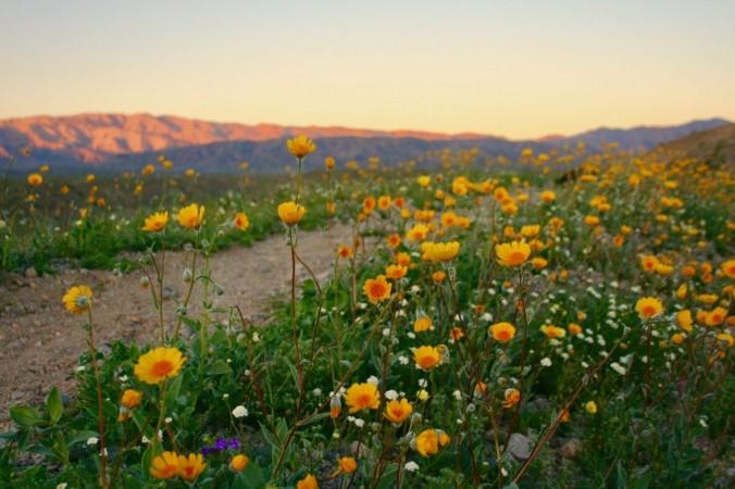 GPS DesertLandscape 08 1200x785 1 676x450 1 - Очарование пустыни: выходные в Палм-Спрингс