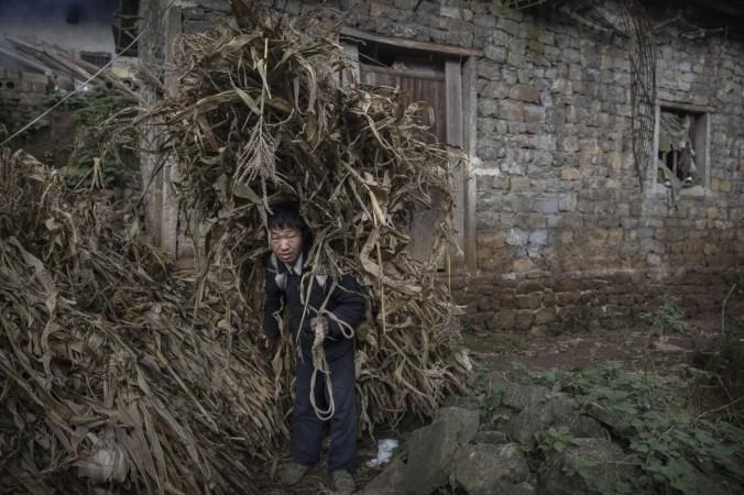 Главное фото. Фермер несёт кукурузную шелуху для кормления животных в деревне Сяобатян провинции Гуйчжоу на юго-западе Китая, 7 февраля 2017 г. Кевин Фрайер/Getty Images | Epoch Times Россия