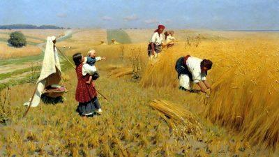 О загадочной пшенице под названием полба