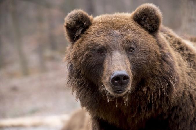 Медведь задрал насмерть подростка в национальном парке Красноярского края
