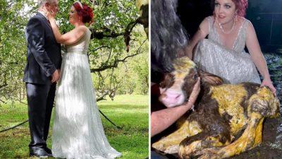 Невеста на свадьбу получила подарок от своей коровы