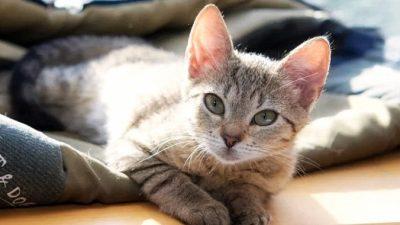 Наймитесь сиделкой для кошек и путешествуйте по миру