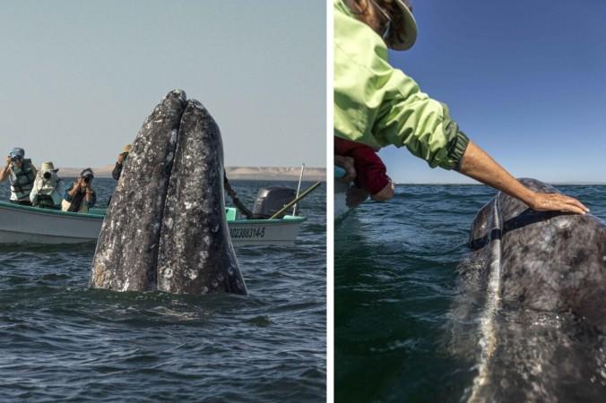 Экскурсанты не видят всплывающего возле их лодки кита, так как смотрят в другом направлении. (Caters News) | Epoch Times Россия