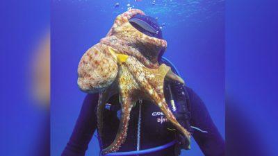Бесцеремонный осьминог полез обнимать и целовать дайвера