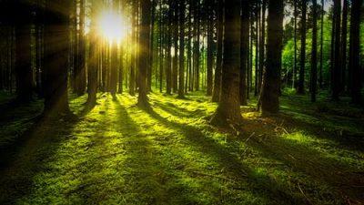 Заново открывая целебную силу природы