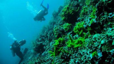 Дайвинг наподводных вулканахИндонезии
