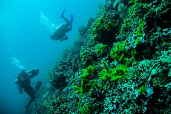 Индонезия предлагает одни излучших в мире мест для дайвинга навулканах. (Image: <a href=