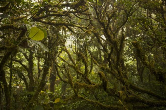 Облачный лес в Монтеверде — звезда Костариканского тура