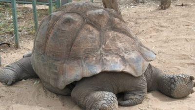 Китайские пользователи Интернета прозвали этот зоопарк «концлагерем для животных»