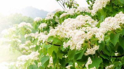 Лекарственные свойства растений были известны ещё 6000 лет назад