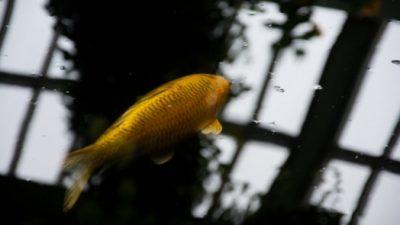 Выпрыгивающие из воды рыбы и необычные облака в Китае предвещают землетрясение?