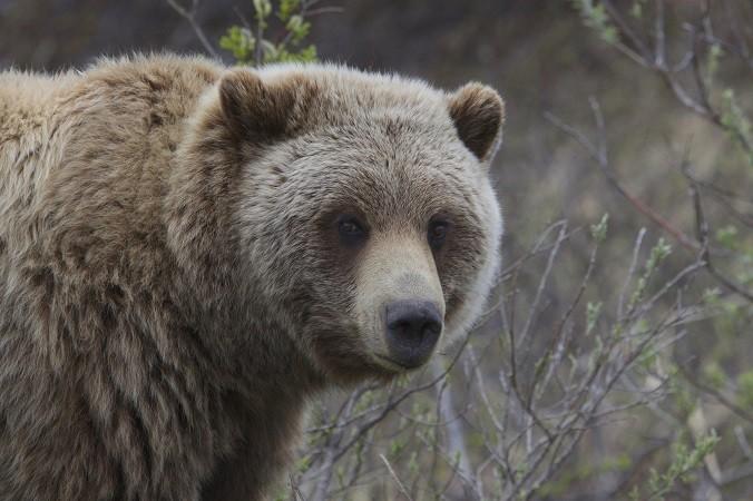 Медведь напал на дрессировщицу во время выступления цирка в Кузбассе