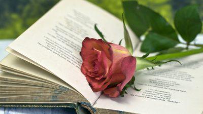 Бессмертный стих барда Роберта Бёрнса «Красная, красная роза»