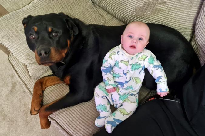 Крепкая дружба младенца и ротвейлера