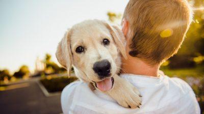 В США запретили ввоз собак из России из-за бешенства