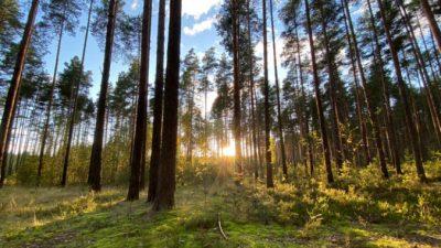 В Омске представят второй карбоновый полигон России