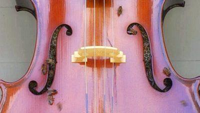 Пчёлы построили улей в виолончели