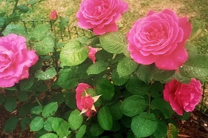 Цветы во спасение