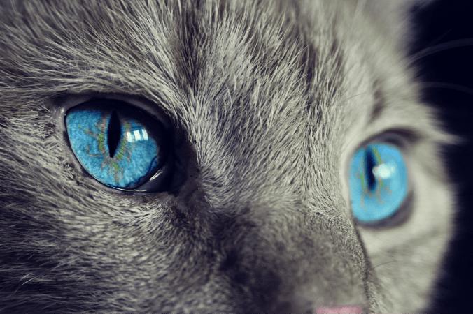cat 1285634 1280 676x450 1 - У вас есть кошка? Цените её!