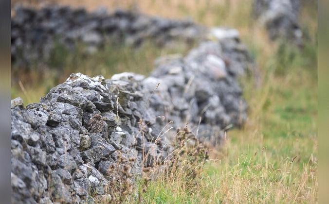 Деталь показывает, где пряталась курица фазан. (Caters Новости) | Epoch Times Россия