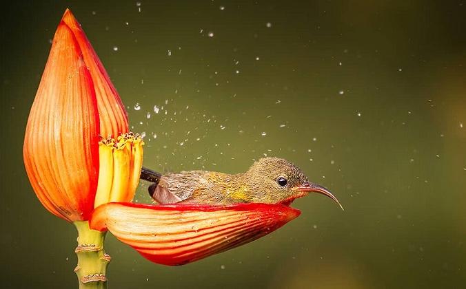 et sunbird 678 web 1200x720 1 676x420 1 - Маленькая птичка принимает утреннюю ванну