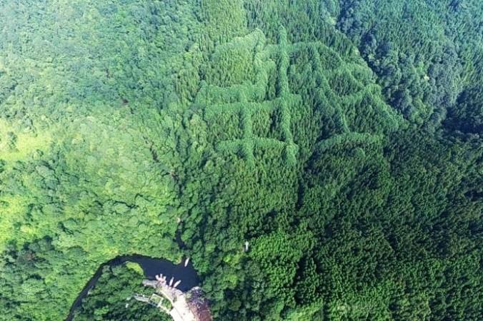 Загадочные узоры, напоминающие китайские иероглифы, можно увидеть на севере леса на вершине горы в деревне Матоу, провинция Сичунь, Китай. (Изображение с <a href=