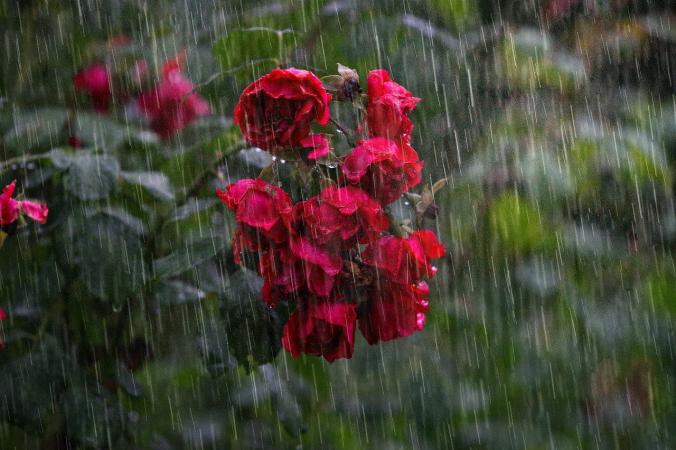 Сильные дожди накроют регионы России