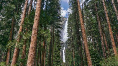 Величественная природа в национальном парке Йосемити