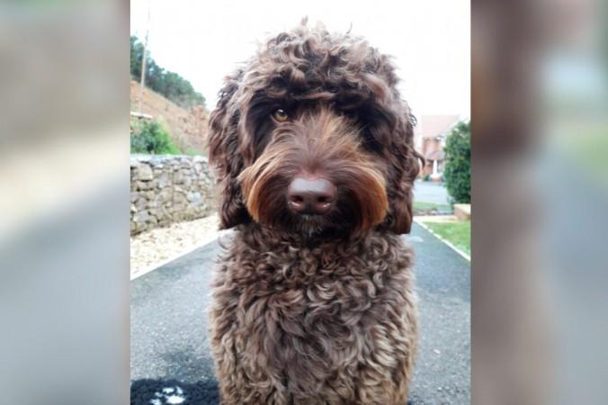 Собака спасла девушку от самоубийства