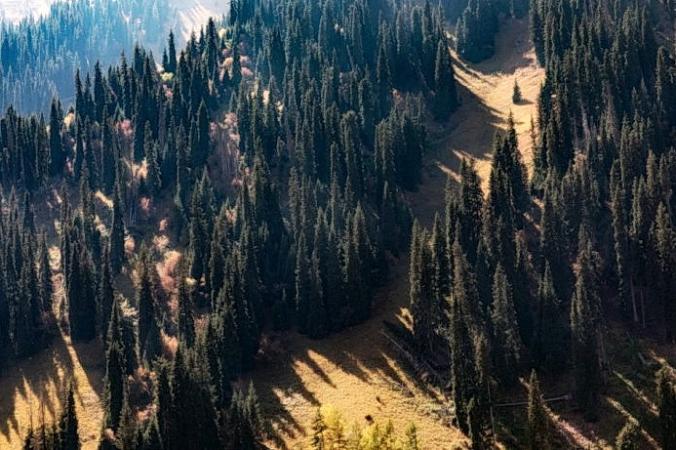 Еловый лес Тяньшань Сюэлин в Синьцзяне. (Фото:<a href=