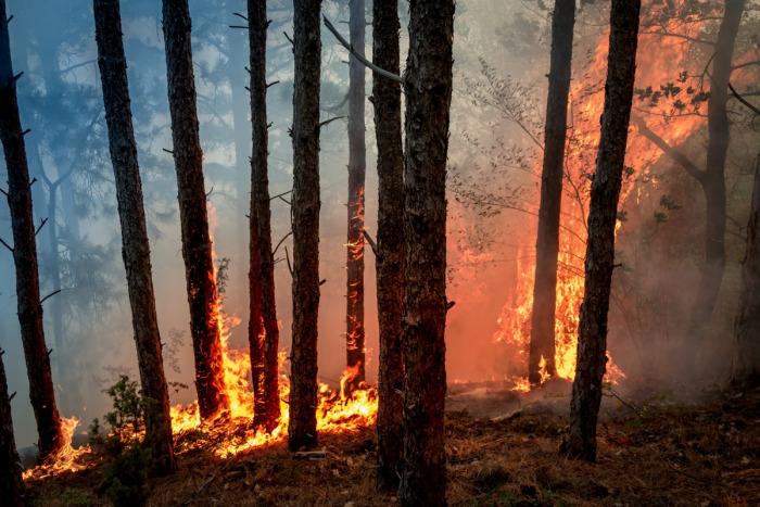 Более 80% лесных пожаров в Свердловской области произошли по вине людей