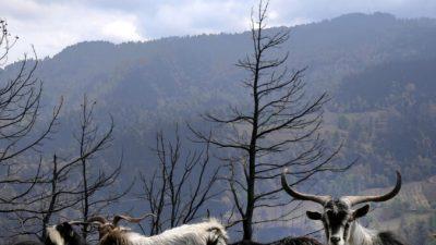 В Греции снова загорелся остров Эвия