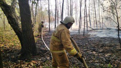 В Самарской области сгорели 14 домов, пожар распространился на 100 га
