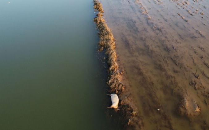 Туша свиньи лежит в воде на сельскохозяйственных угодьях после проливных дождей в провинции Хэнань, Китай, 25 июля 2021 г. Aly Song /Reuters   Epoch Times Россия