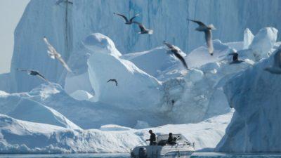 Впокрытой льдом Гренландии 500 лет назад росли ивы