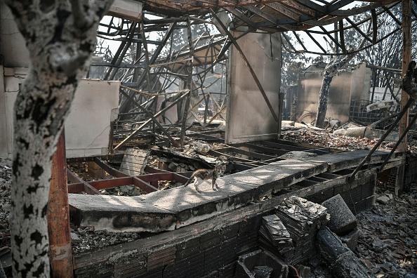 Котик в сгоревшем доме в Варибобе, что в пригороде Афин, 4 августа 2021 года. Photo LOUISA GOULIAMAKI/AFP via Getty Images | Epoch Times Россия