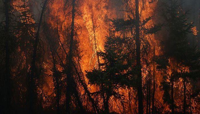 Лесной пожар. Фото: COLE BURSTON/AFP/Getty Images)   Epoch Times Россия