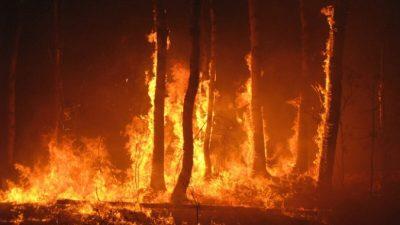 Что в дыме лесного пожара?