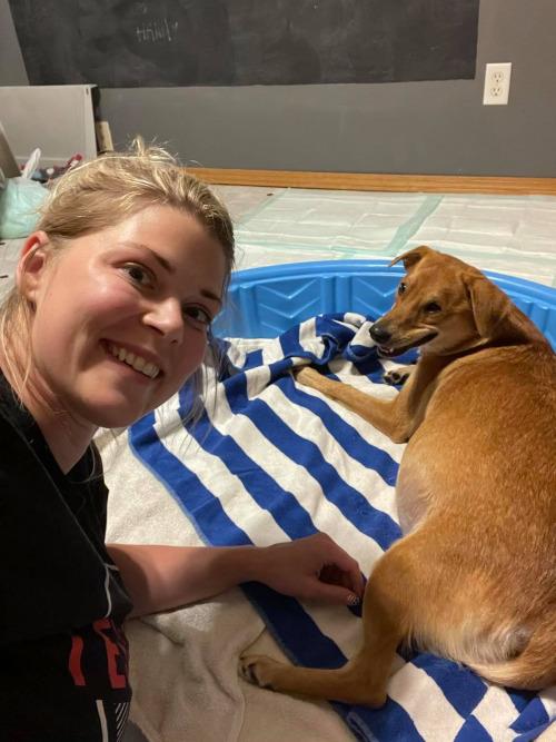 Собака из Миннесоты стала доброй матерью для щенков-сироток