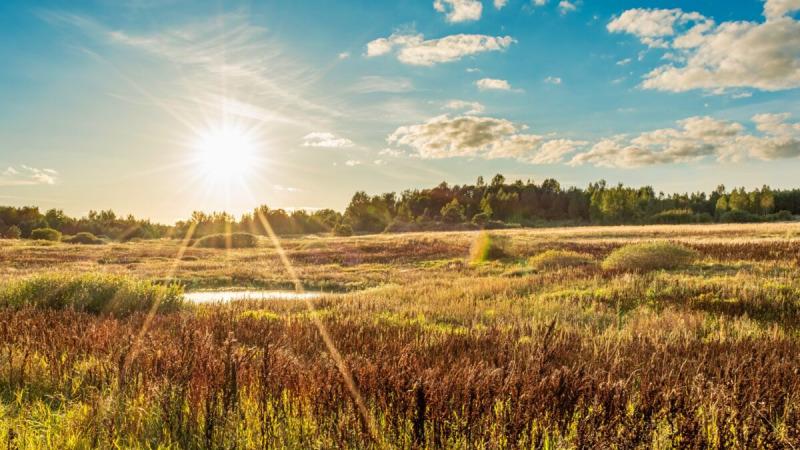 Конец жары - это солнечный термин, когда созревают зерна, и время с нетерпением ждать урожая. (Алексей Морозов / Shutterstock)    Epoch Times Россия