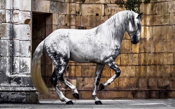 (С любезного разрешения Equine от Видаль) | Epoch Times Россия